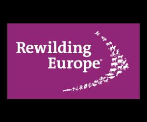 Google Ad Grants Specialist | Rewilding Europe